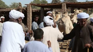 Group of Egyptian men haggling at Daraw camel market
