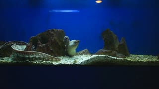 Group of moray eels swimming in aquarium