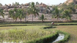 HAMPI, INDIA - 28 JANUARY 2015: Beautiful view of the rice valley in Hampi.