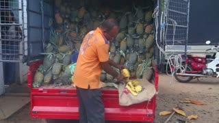 HIKKADUWA, SRI LANKA - FEBRUARY 2014: Man slicing a pineapple at Hikkaduwa Sunday market, known for its wide range of fresh and varied produce.