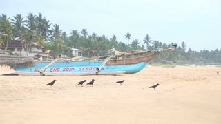 HIKKADUWA, SRI LANKA - FEBRUARY 2014: View of Hikkaduwa beach while waves are splashing and the birds are near the ocean. Hikkaduwa is famous for its beautiful beaches.