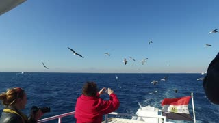 HURGHADA, EGYPT - FEBRUARY 13, 2016: Tourist taking photos of flock of seagulls flying over Red sea