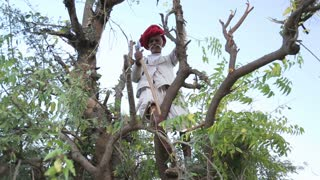 JODHPUR, INDIA - 13 FEBRUARY 2015: Man standing between tree branches and madly brandishing with a stick.