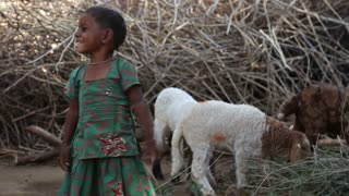 JODHPUR, INDIA - 13 FEBRUARY 2015: Portrait of beautiful Indian girl standing by sheep in back yard.
