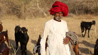 JODHPUR, INDIA - 13 FEBRUARY 2015: Portrait of cattle keeper at field, with cattle passing in background, closeup.