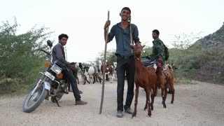 JODHPUR, INDIA - 13 FEBRUARY 2015: Portrait of young cattle keepers at rural road in Jodhpur.