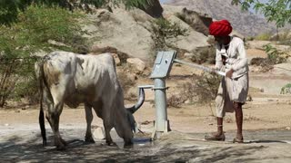 JODHPUR, INDIA - 14 FEBRUARY 2015: Man drawing water from pumping station for a thirsty cow at field in Jodhpur.