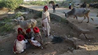 JODHPUR, INDIA - 14 FEBRUARY 2015: Men sitting on ground in traditional clothing while cattle passes down the road.