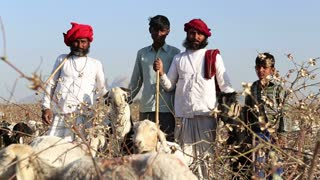 JODHPUR, INDIA - 14 FEBRUARY 2015: Portrait of cattle keepers at field in Jodhpur, with sheep chewing in front.