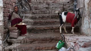 JODHPUR, INDIA - 5 FEBRUARY 2015: Woman sitting on the stairs while goat standing next to her.