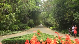 KANDY, SRI LANKA - FEBRUARY 2014: Tracking shot of botanical gardens in Kandy. The gardens attract 2 million visitors annually.