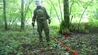KUTINA, CROATIA - JUNE 2014: Man trying to detect mine in demining process in the middle of forest.