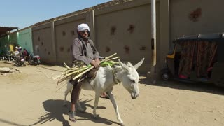 LUXOR, EGYPT - FEBRUARY 10, 2016: Local man on donkey carry sugar cane