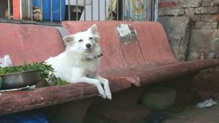 MUMBAI, INDIA - 10 JANUARY 2015: Dog laying on a bench in a slum in Mumbai.