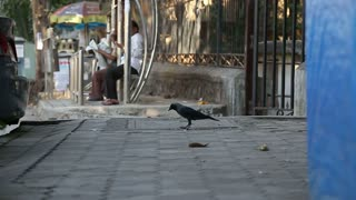 MUMBAI, INDIA - 7 JANUARY 2015: Pigeon on the street, with people on a station in the background.