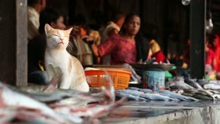 MUMBAI, INDIA - 8 JANUARY 2015: Cat sitting on a fish stand at the market, with vendors in the background.