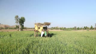 Panoramic view of wheat field in Jodhpur with small tree house.