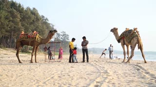 People and camels at sandy beach in Goa.