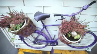Purple bike with flowers in the basket hung on the wall as decoration