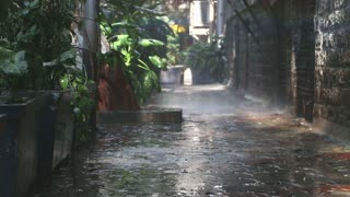 Rain falling on plants in empty street in Mumbai.