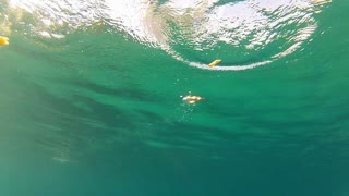 seagulls landing on water and eating, filmed from underwater