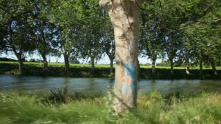 Slow motion - Cycling past trees on the canal du midi in France