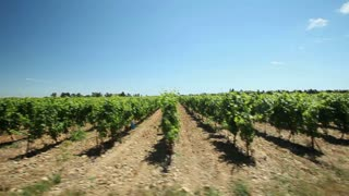 Slow motion - Driving past vineyard in the south of France.