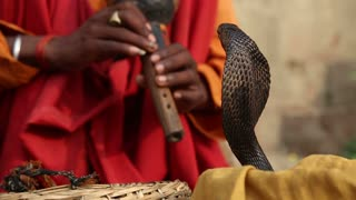 Snake being charmed by music played by man at street in Varanasi.