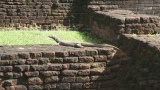 The view of big lizard in Sigiriya, an ancient palace located in the central Matale District.