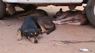 Three dogs resting under a car on the street in Goa.