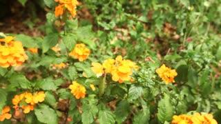 Tracking shot of beautiful orange flowers in botanical gardens.