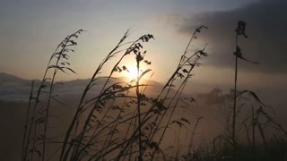 View of long grass in the wind at sunrise on the Little Adam's Peak in Ella. Ella is a beautiful small sleepy town on the southern edge of Sri Lanka's Hill Country.