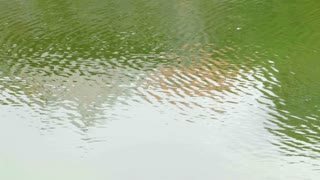 Water reflection on green surface with small ripples
