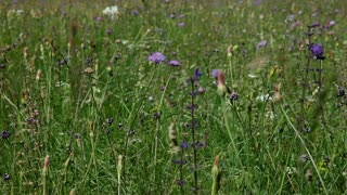 wild flowers in field in countryside