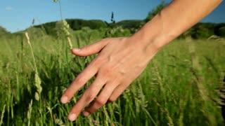 Woman's hand in field