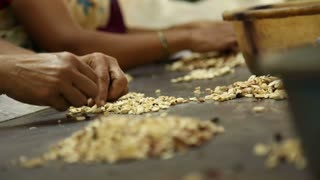 Women picking and sorting cashew nuts with their hands.