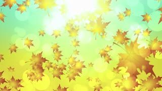Warm Autumn Leaves Falling