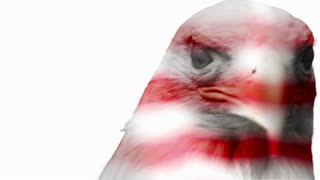 American Icon - Bald Eagle overlaid with flag texture on white background
