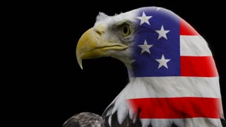 Bald Eagle in front of black background with flaghead