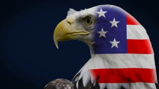 Bald Eagle in front of blue background with flaghead
