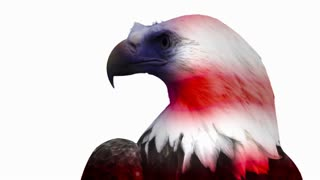 Bald Eagle Stoic look with flag overlay