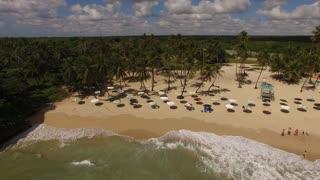 Beach Aerial Umbrellas And Palm Trees