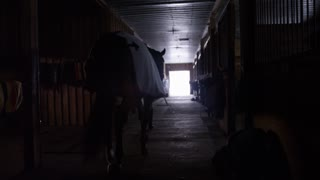 Equestrian horse being walked through cold winter barn