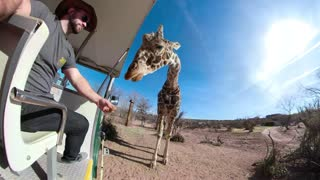 Giraffe eating out of tourists hand transition to tiny planet 1