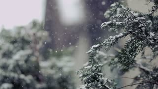 Winter Scene with Slow Motion Snow - Negative Space