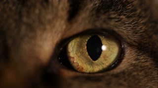 Extreme close-up of a cat's eye