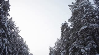 Scenic Forest Road Between Snow-Covered Pine Trees