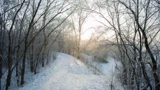 Beautiful Snowy Morning