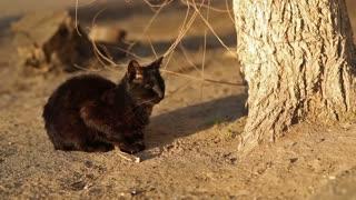 Black Homeless Cat