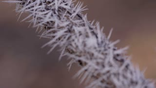 Branch in Hoarfrost